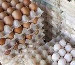 قیمت تخم مرغ دوباره پر کشید